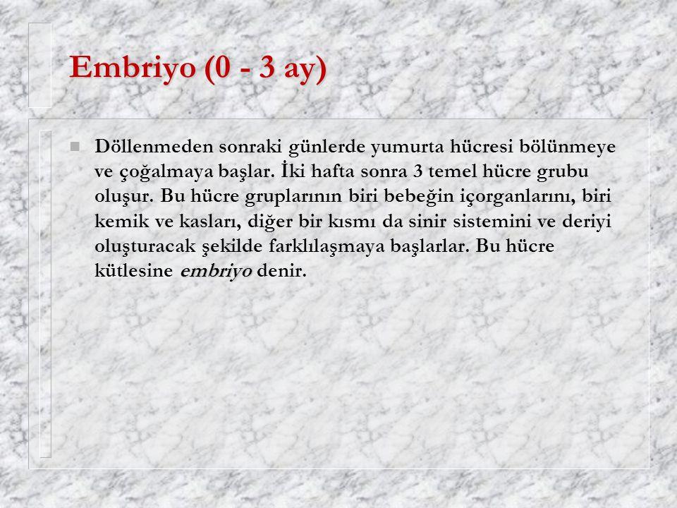 Embriyo (0 - 3 ay)