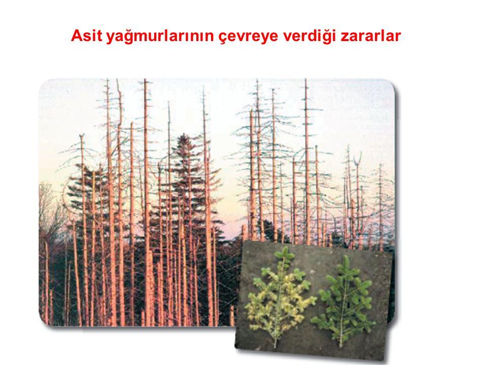 Asit yağmurlarının çevreye verdiği zararlar