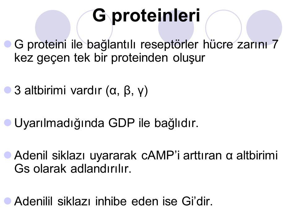 G proteinleri G proteini ile bağlantılı reseptörler hücre zarını 7 kez geçen tek bir proteinden oluşur.