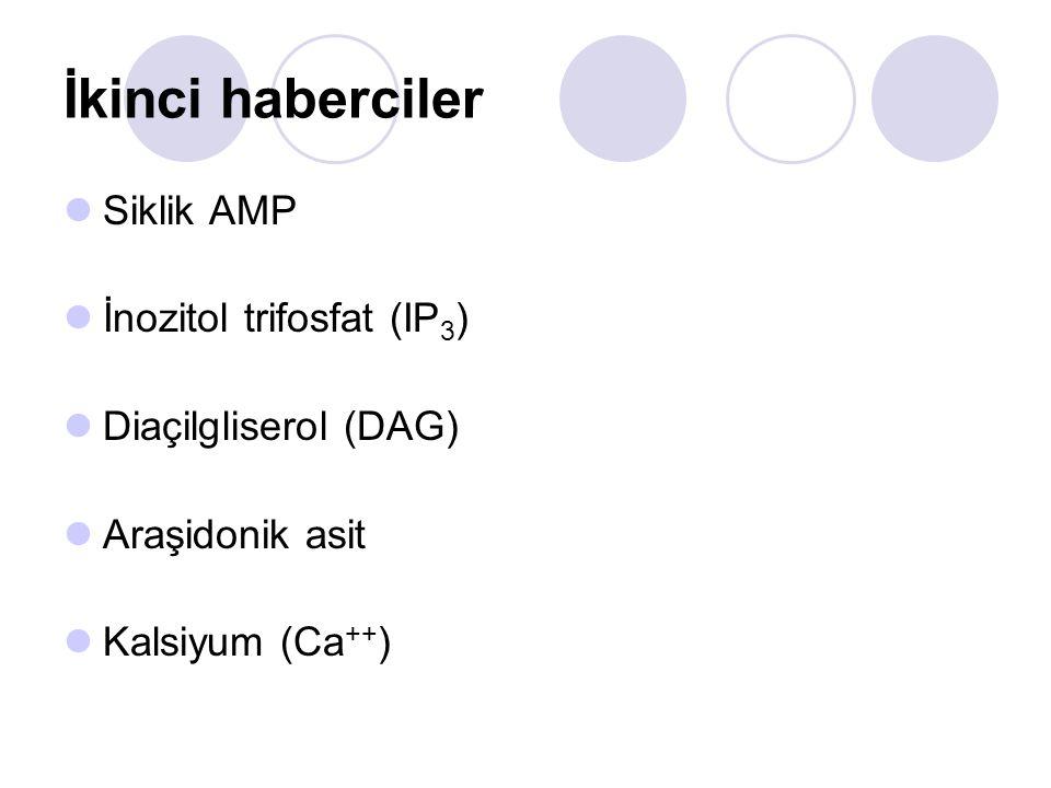 İkinci haberciler Siklik AMP İnozitol trifosfat (IP3)