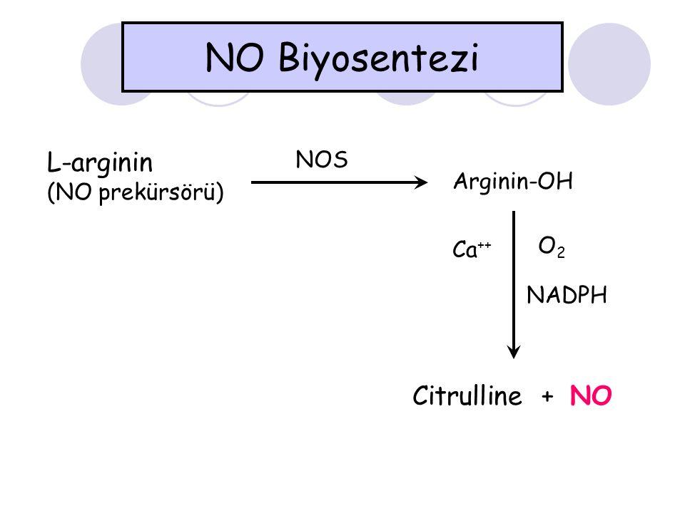 NO Biyosentezi L-arginin Citrulline + NO NOS (NO prekürsörü)