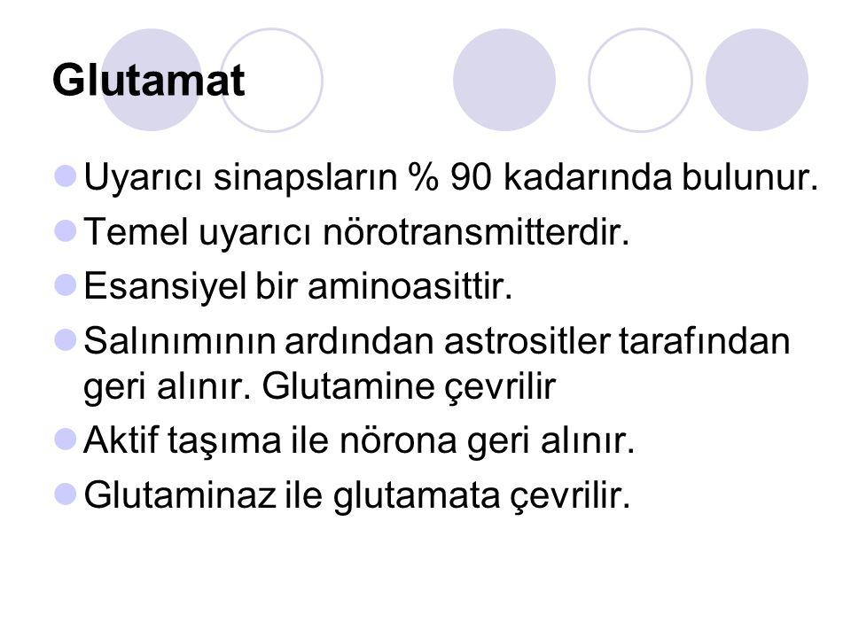 Glutamat Uyarıcı sinapsların % 90 kadarında bulunur.