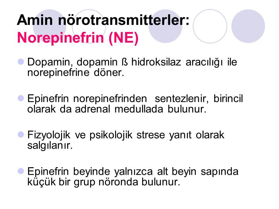 Amin nörotransmitterler: Norepinefrin (NE)