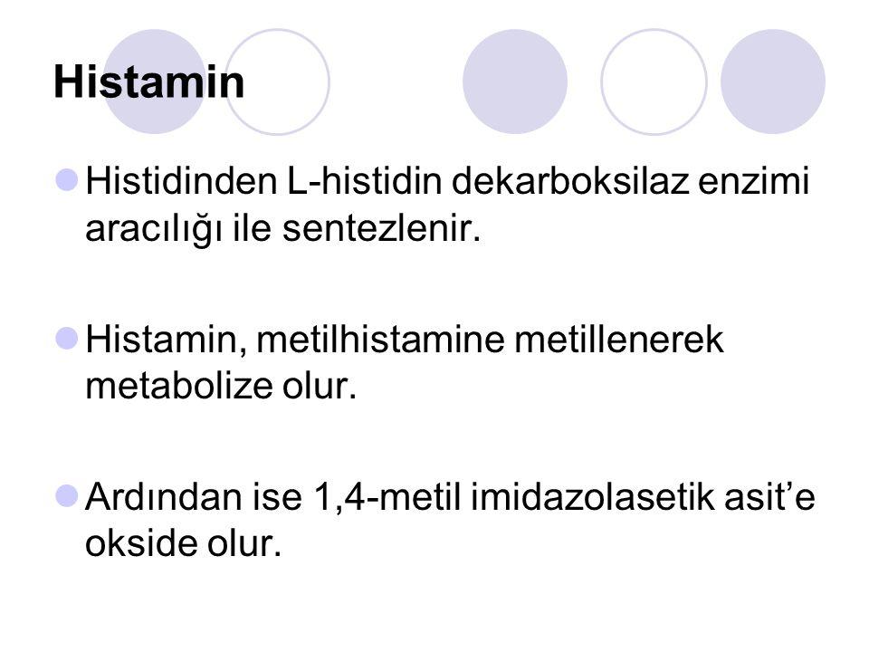 Histamin Histidinden L-histidin dekarboksilaz enzimi aracılığı ile sentezlenir. Histamin, metilhistamine metillenerek metabolize olur.