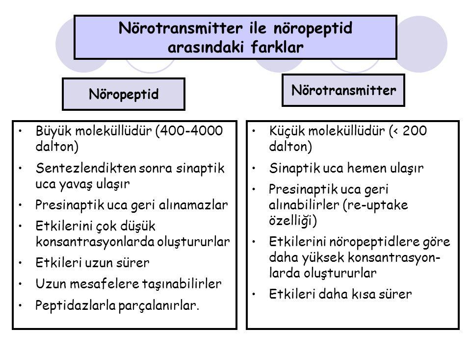 Nörotransmitter ile nöropeptid arasındaki farklar