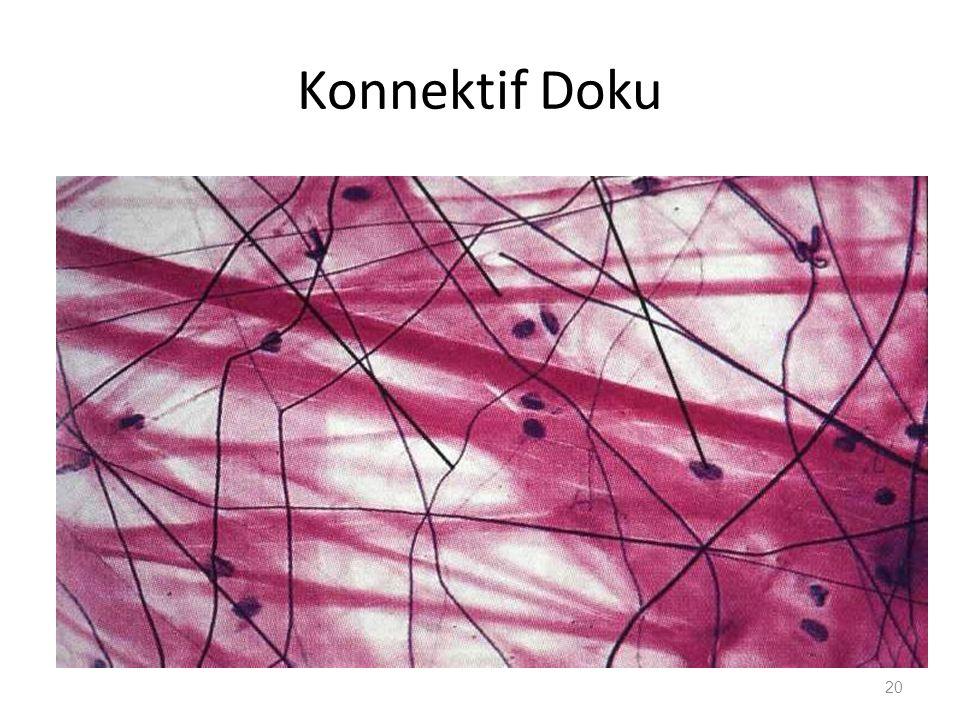 Konnektif Doku
