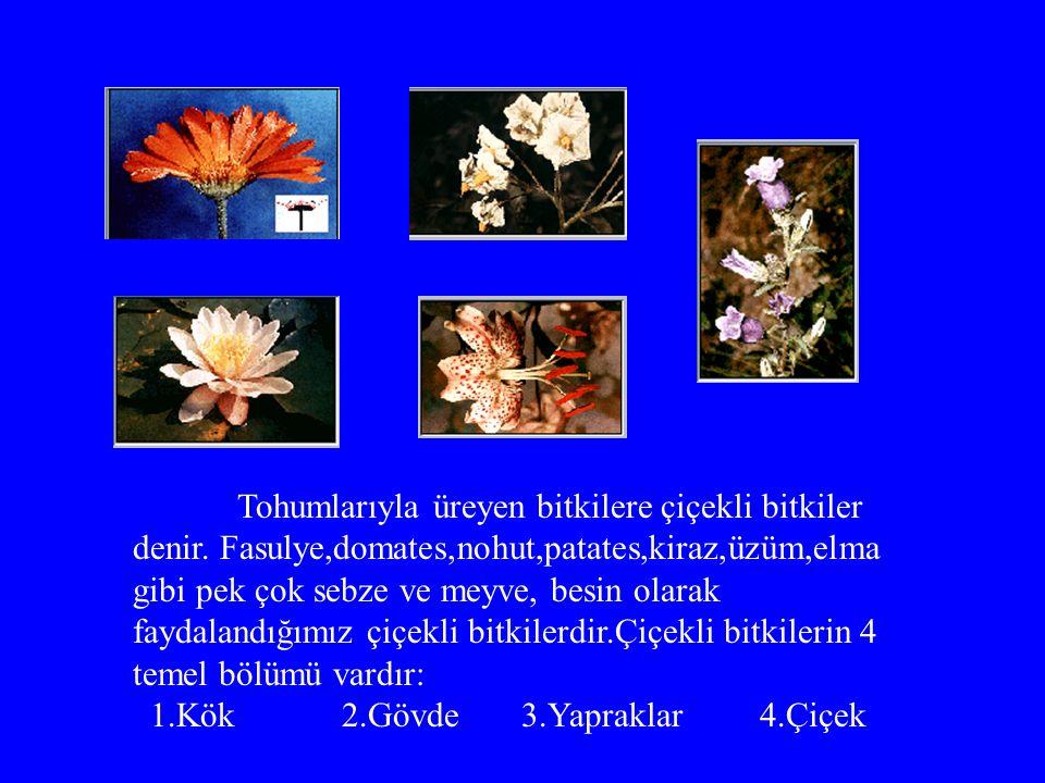 Tohumlarıyla üreyen bitkilere çiçekli bitkiler denir
