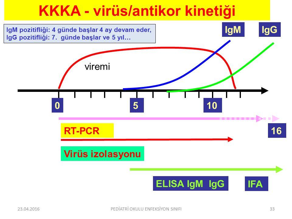 KKKA - virüs/antikor kinetiği