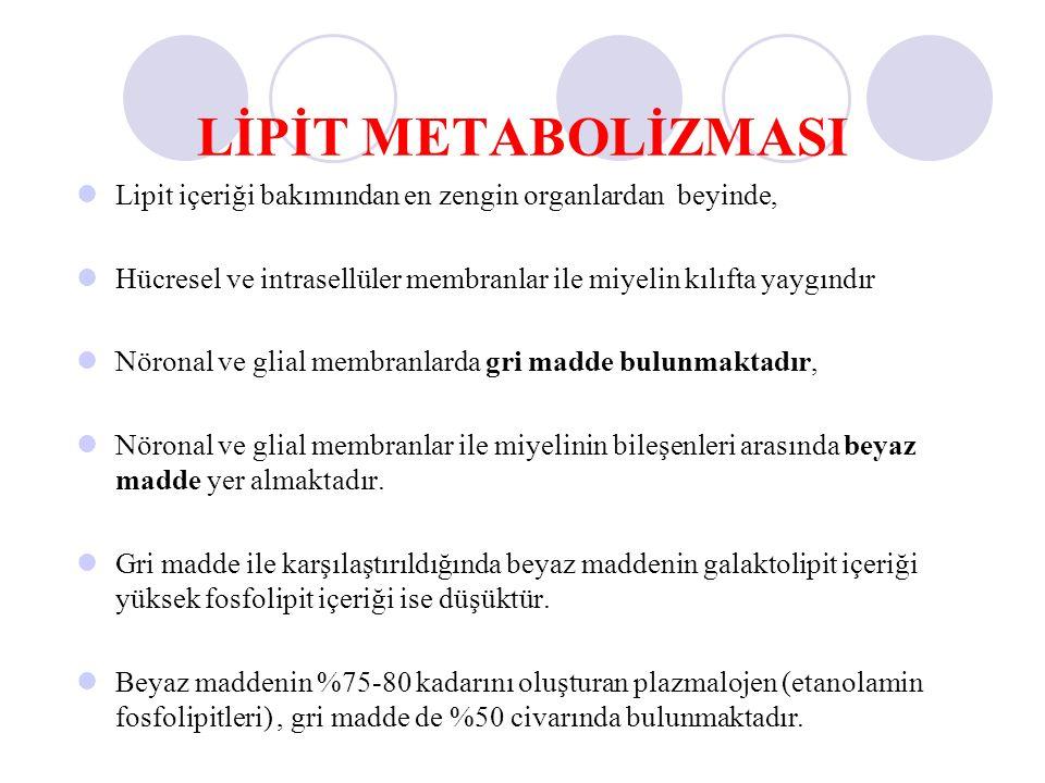 LİPİT METABOLİZMASI Lipit içeriği bakımından en zengin organlardan beyinde, Hücresel ve intrasellüler membranlar ile miyelin kılıfta yaygındır.