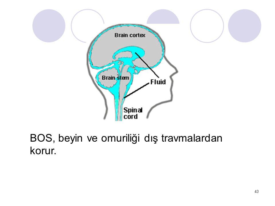 BOS, beyin ve omuriliği dış travmalardan korur.