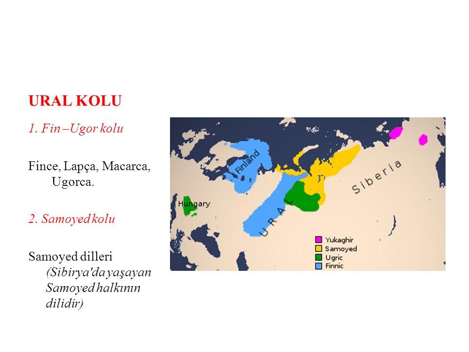 URAL KOLU 1. Fin –Ugor kolu Fince, Lapça, Macarca, Ugorca.