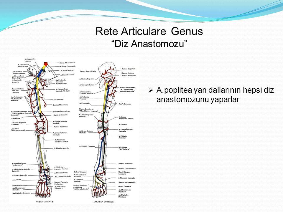 Rete Articulare Genus Diz Anastomozu