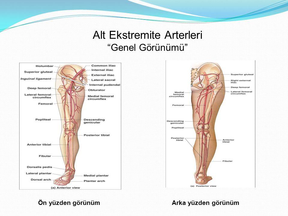 Alt Ekstremite Arterleri Genel Görünümü