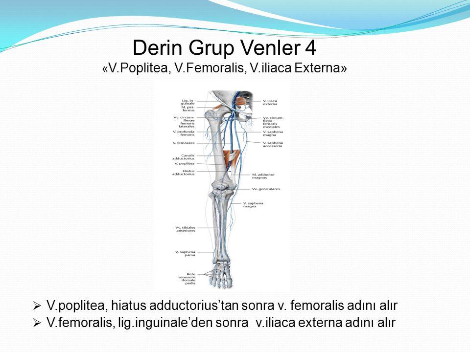 Derin Grup Venler 4 «V.Poplitea, V.Femoralis, V.iliaca Externa»