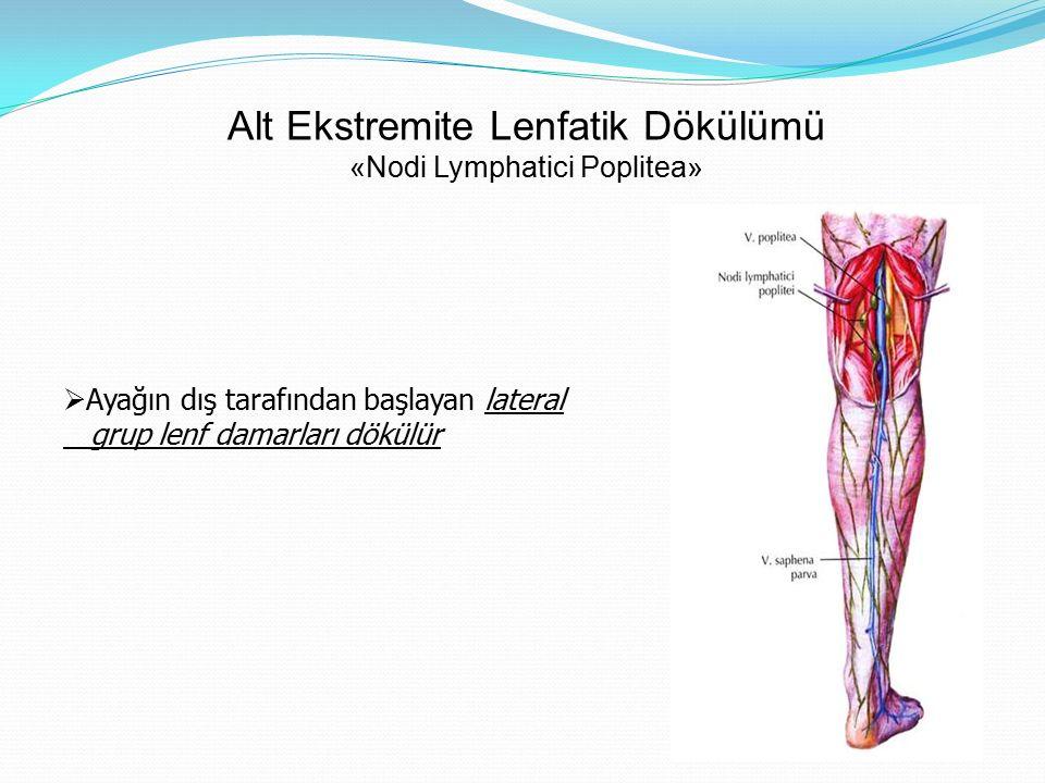 Alt Ekstremite Lenfatik Dökülümü «Nodi Lymphatici Poplitea»