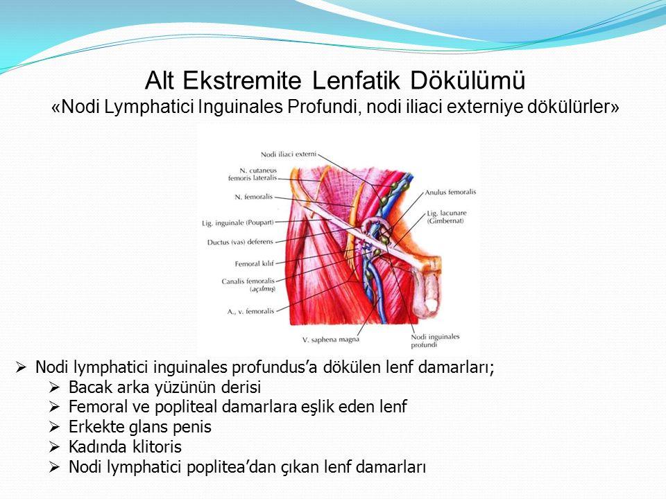 Alt Ekstremite Lenfatik Dökülümü «Nodi Lymphatici Inguinales Profundi, nodi iliaci externiye dökülürler»