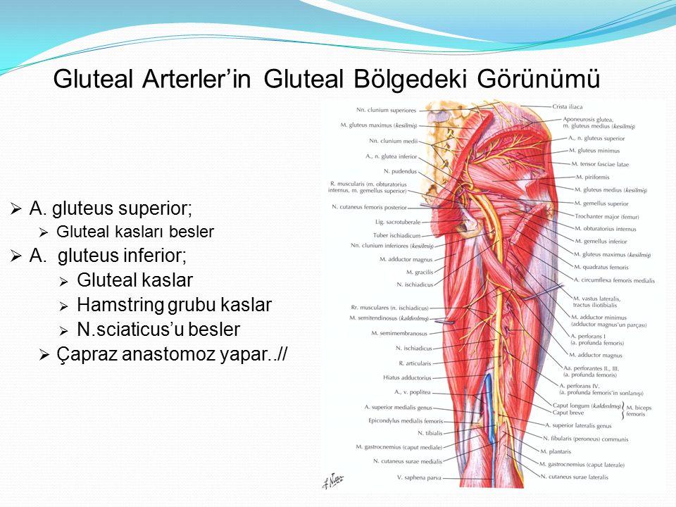 Gluteal Arterler'in Gluteal Bölgedeki Görünümü