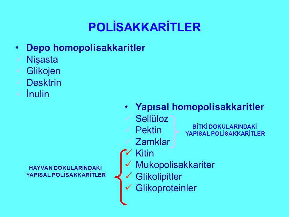 YAPISAL POLİSAKKARİTLER YAPISAL POLİSAKKARİTLER