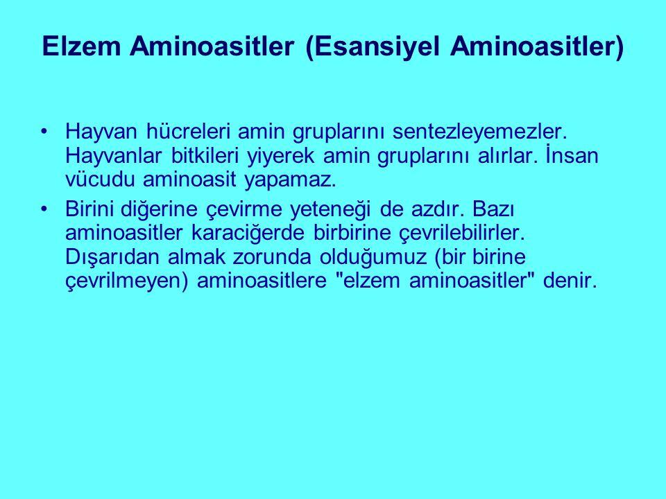 Elzem Aminoasitler (Esansiyel Aminoasitler)