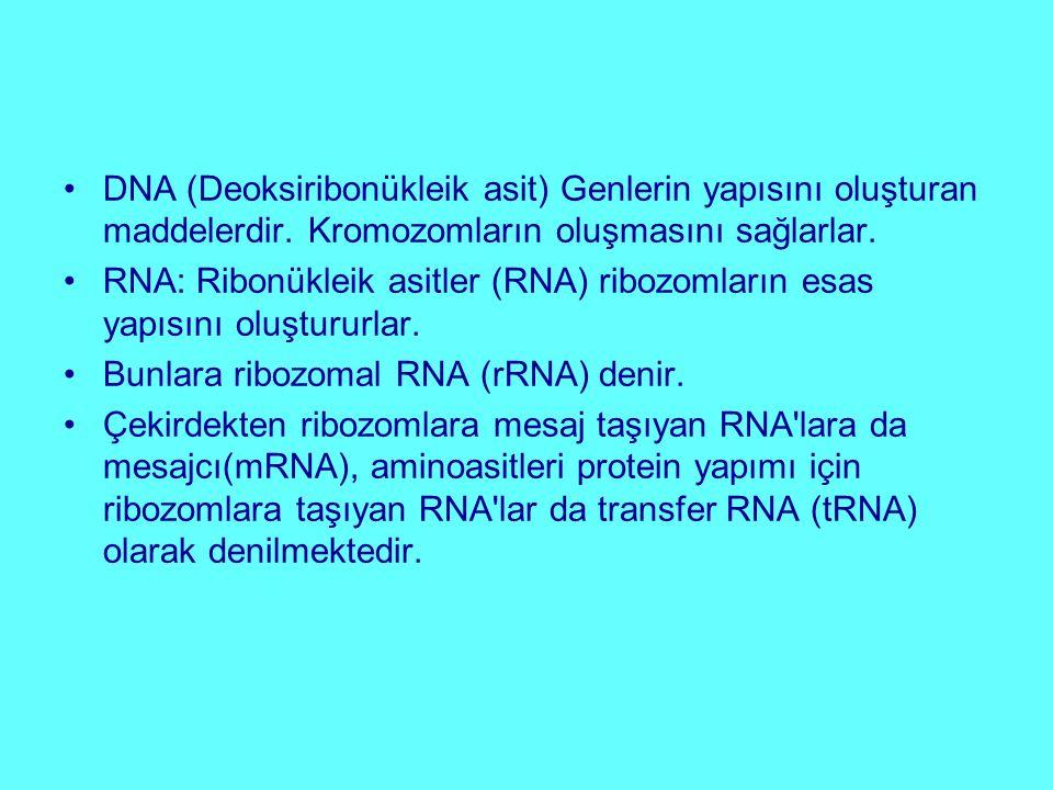 DNA (Deoksiribonükleik asit) Genlerin yapısını oluşturan maddelerdir