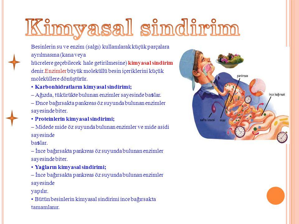Kimyasal sindirim Besinlerin su ve enzim (salgı) kullanılarak küçük parçalara ayrılmasına (kana veya.