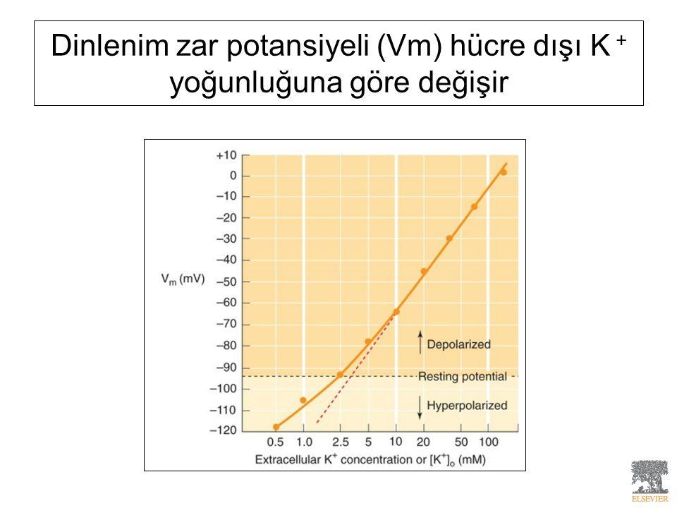 Dinlenim zar potansiyeli (Vm) hücre dışı K + yoğunluğuna göre değişir