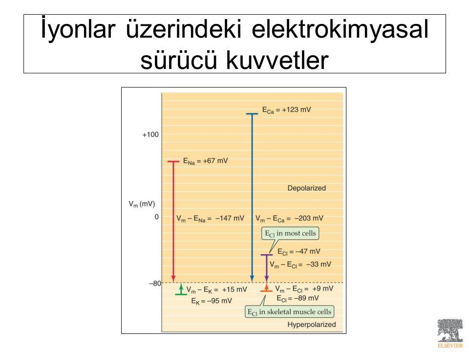İyonlar üzerindeki elektrokimyasal sürücü kuvvetler
