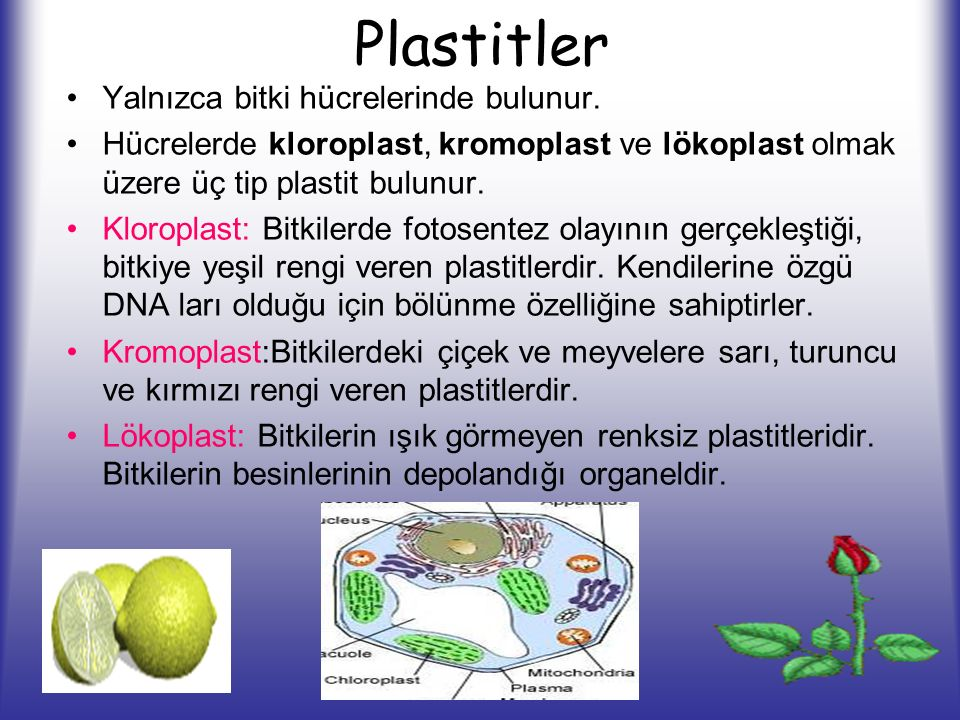 Plastitler Yalnızca bitki hücrelerinde bulunur.