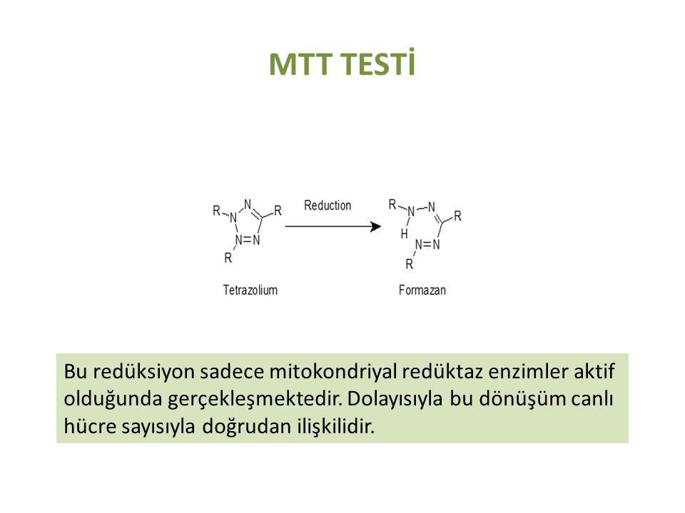 MTT TESTİ