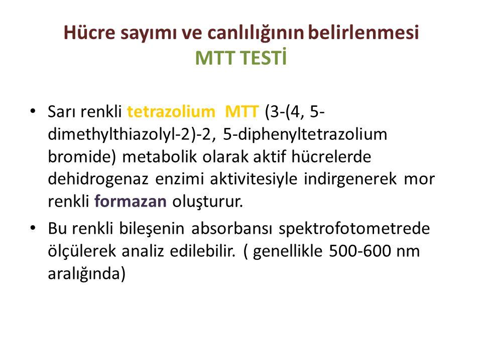 Hücre sayımı ve canlılığının belirlenmesi MTT TESTİ
