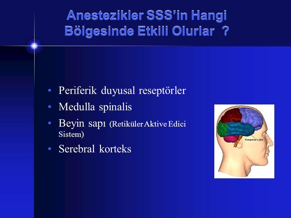 Anestezikler SSS'in Hangi Bölgesinde Etkili Olurlar