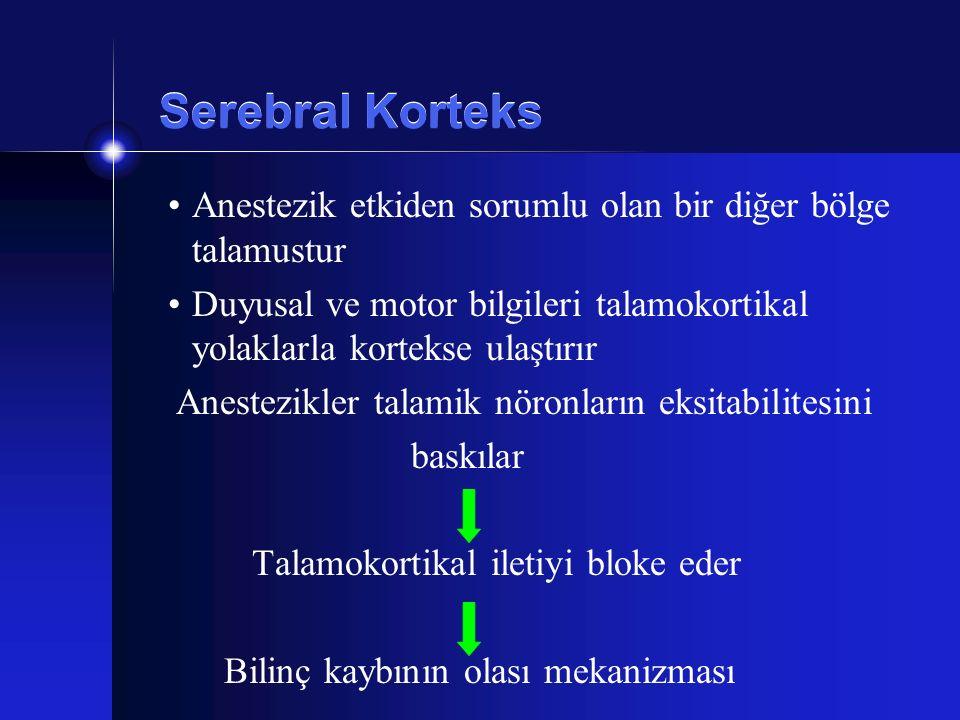 Serebral Korteks Anestezik etkiden sorumlu olan bir diğer bölge talamustur. Duyusal ve motor bilgileri talamokortikal yolaklarla kortekse ulaştırır.