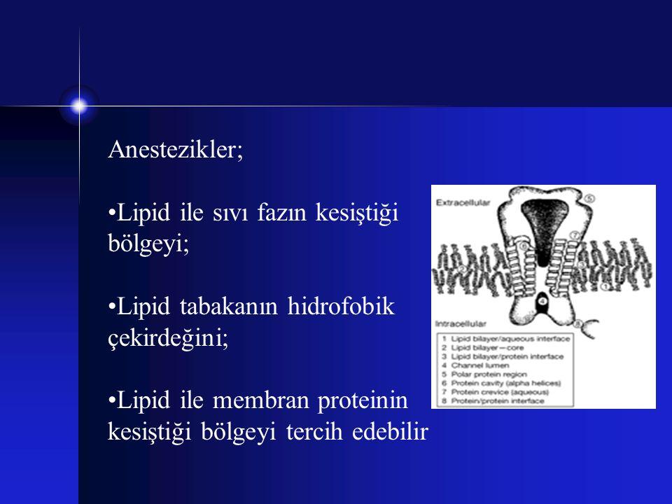Anestezikler; Lipid ile sıvı fazın kesiştiği bölgeyi; Lipid tabakanın hidrofobik çekirdeğini;