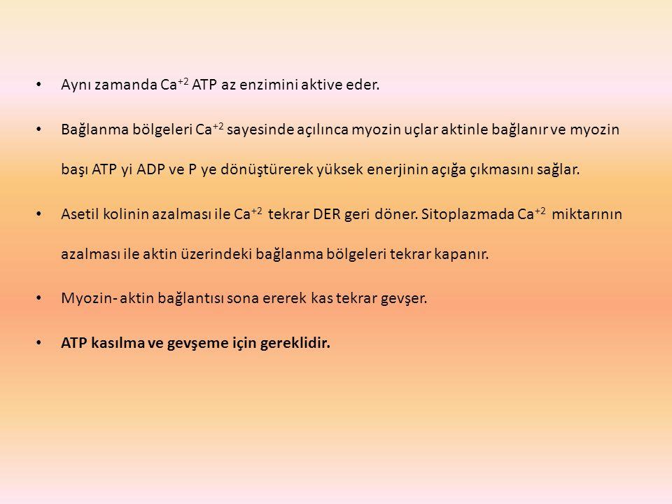Aynı zamanda Ca+2 ATP az enzimini aktive eder.
