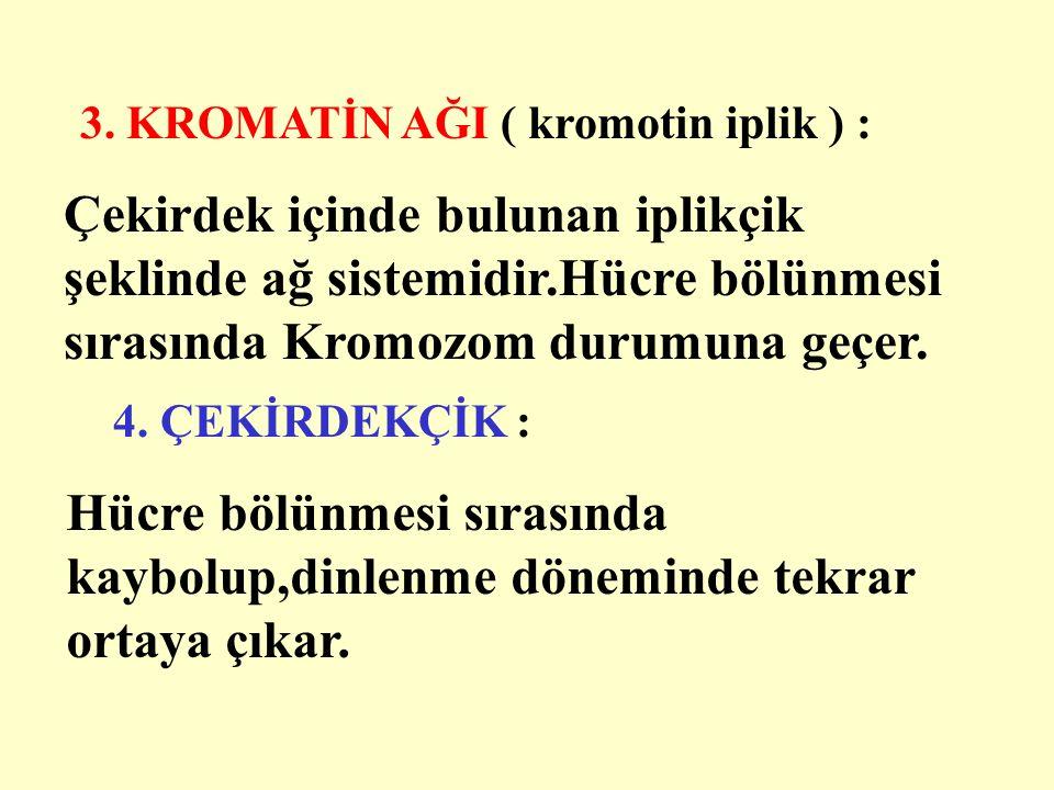 3. KROMATİN AĞI ( kromotin iplik ) :