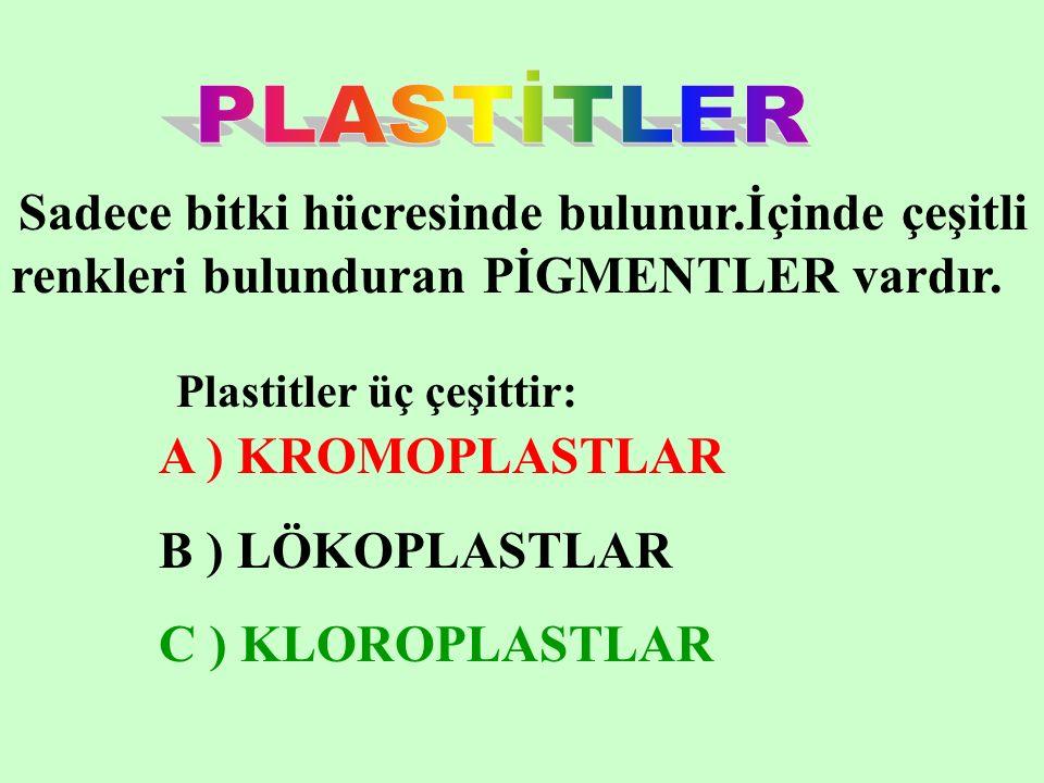 PLASTİTLER A ) KROMOPLASTLAR B ) LÖKOPLASTLAR C ) KLOROPLASTLAR