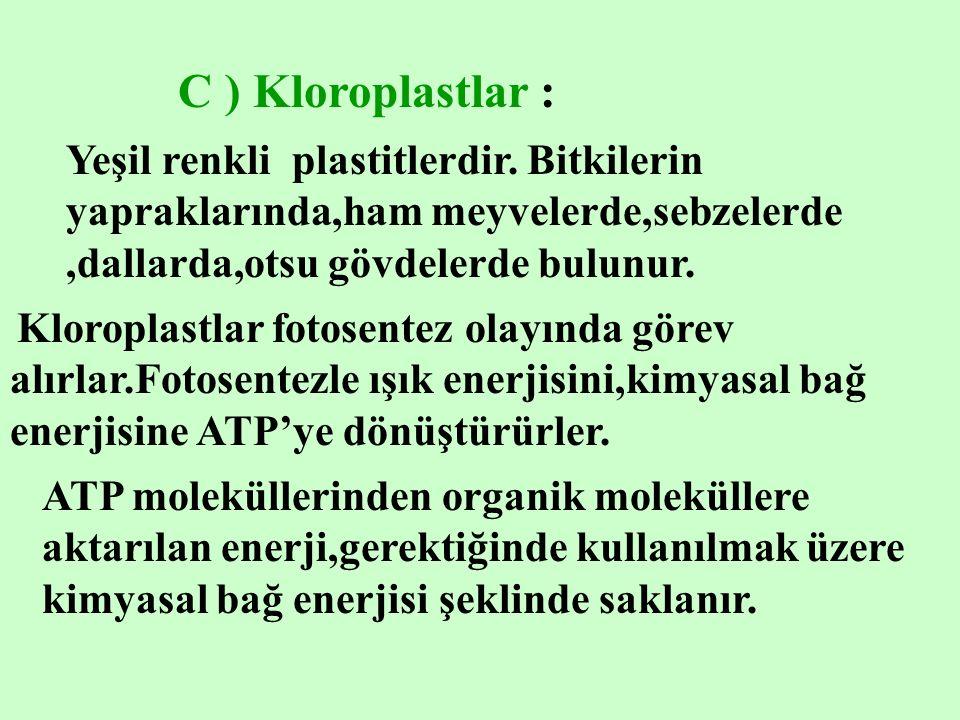 C ) Kloroplastlar : Yeşil renkli plastitlerdir. Bitkilerin yapraklarında,ham meyvelerde,sebzelerde ,dallarda,otsu gövdelerde bulunur.