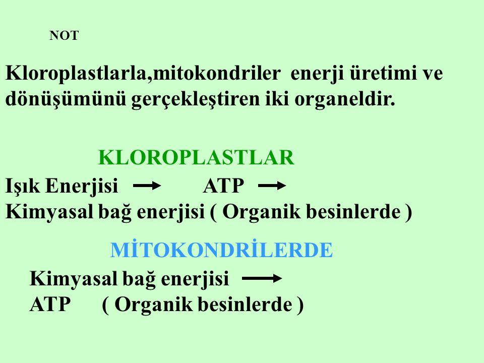 Işık Enerjisi ATP Kimyasal bağ enerjisi ( Organik besinlerde )