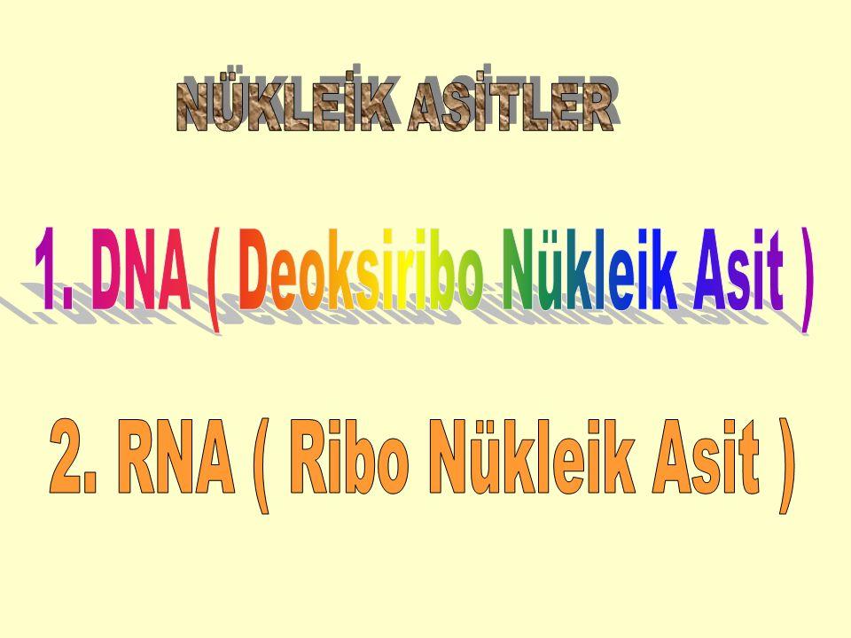 1. DNA ( Deoksiribo Nükleik Asit )