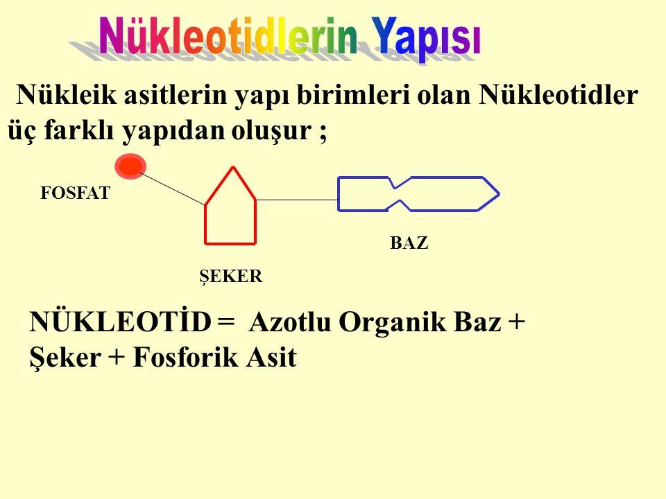 Nükleotidlerin Yapısı