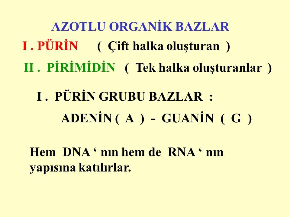I . PÜRİN ( Çift halka oluşturan )