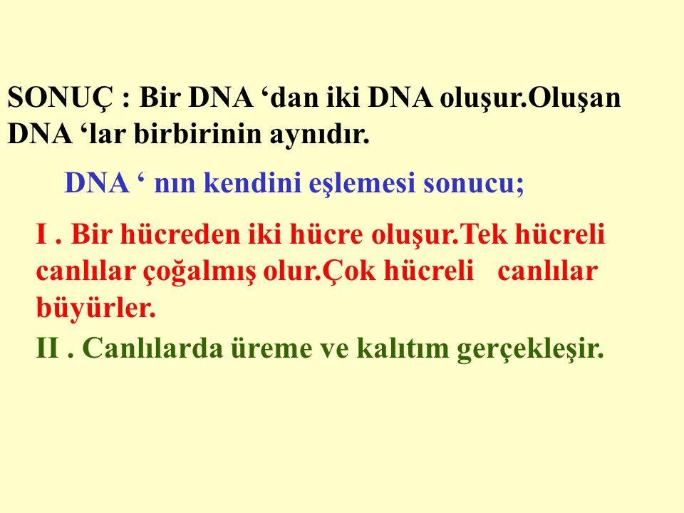 DNA ' nın kendini eşlemesi sonucu;