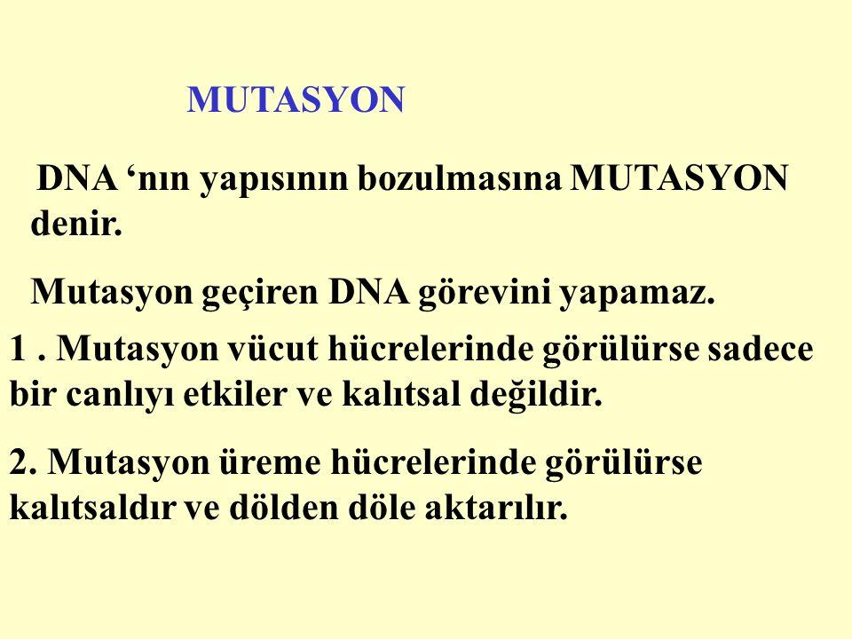 Mutasyon geçiren DNA görevini yapamaz.