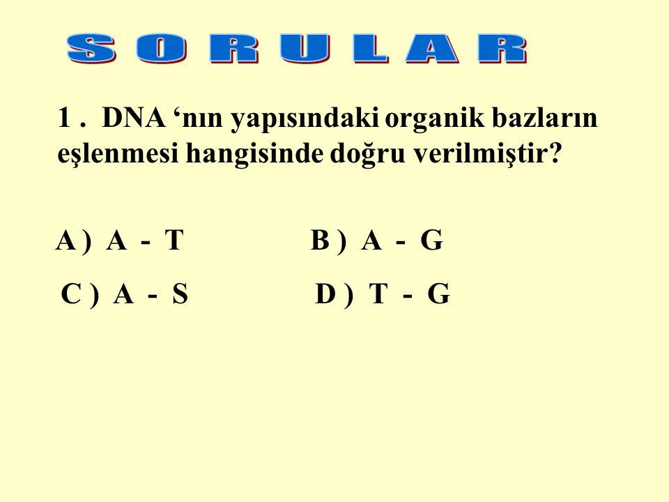 S O R U L A R 1 . DNA 'nın yapısındaki organik bazların eşlenmesi hangisinde doğru verilmiştir A ) A - T B ) A - G.