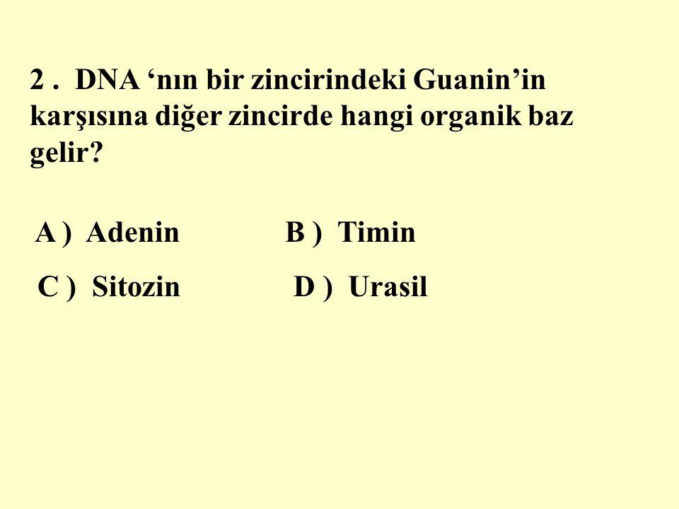 2 . DNA 'nın bir zincirindeki Guanin'in karşısına diğer zincirde hangi organik baz gelir