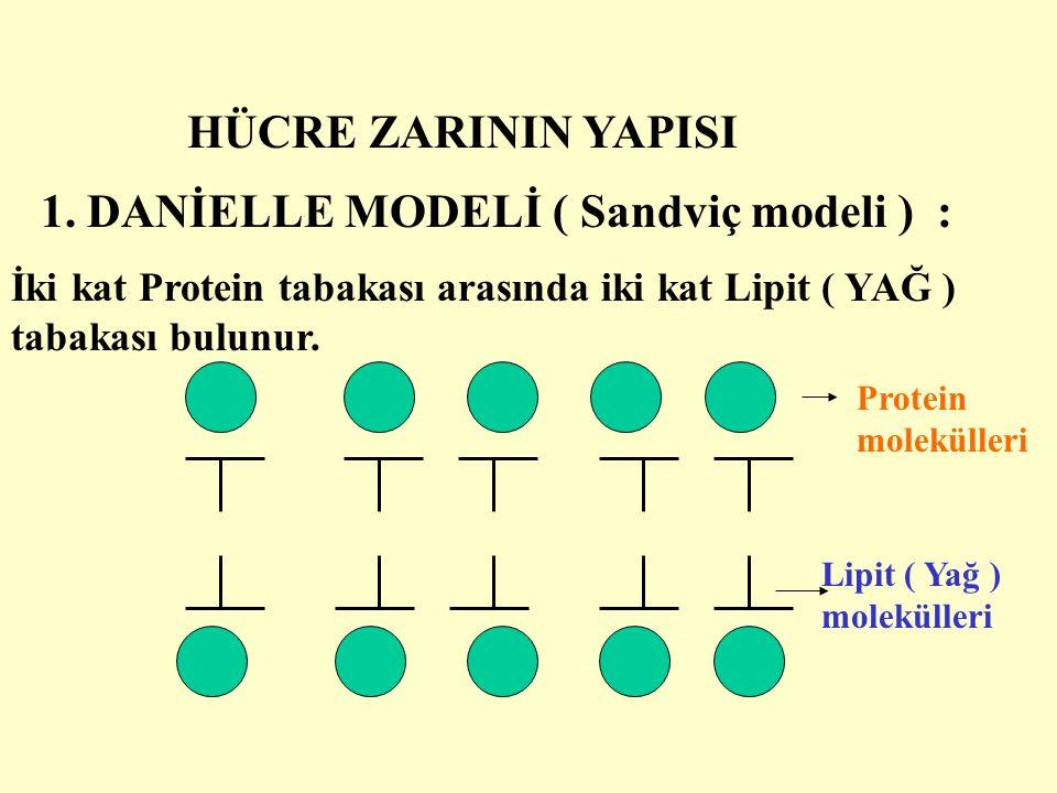HÜCRE ZARININ YAPISI 1. DANİELLE MODELİ ( Sandviç modeli ) : İki kat Protein tabakası arasında iki kat Lipit ( YAĞ ) tabakası bulunur.