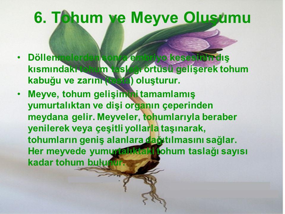 6. Tohum ve Meyve Oluşumu