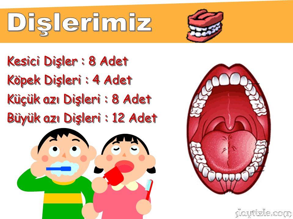Dişlerimiz Kesici Dişler : 8 Adet Köpek Dişleri : 4 Adet