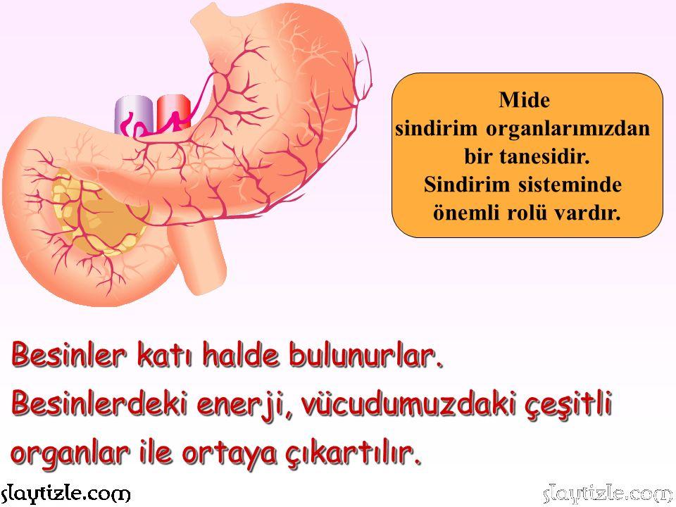 sindirim organlarımızdan