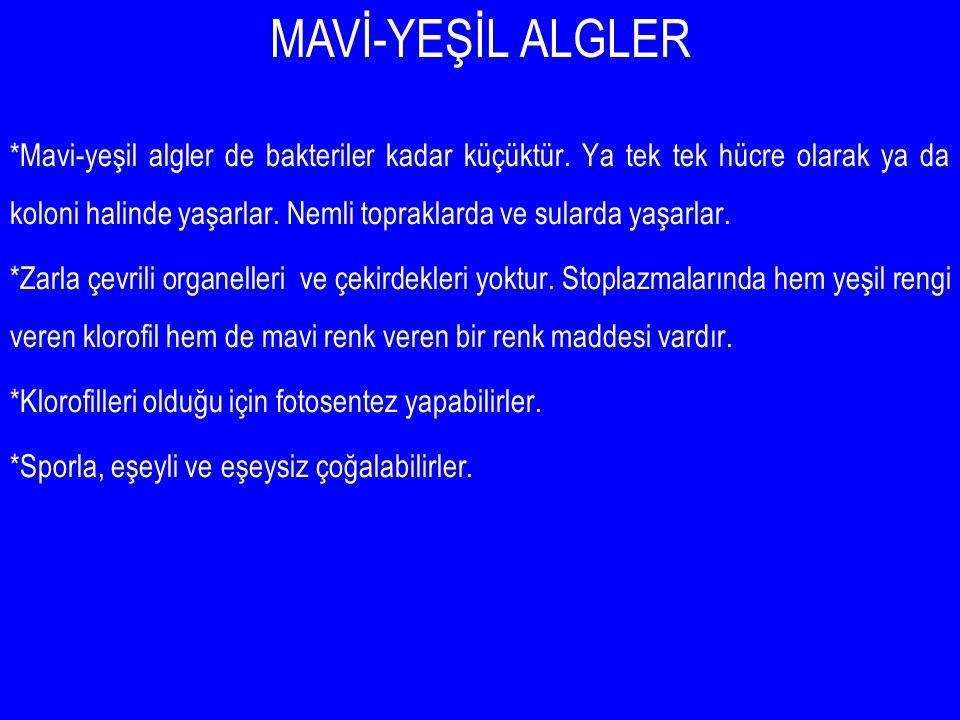 MAVİ-YEŞİL ALGLER